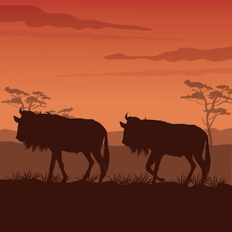 Sunset african landscape with silhouette wildebeest standing