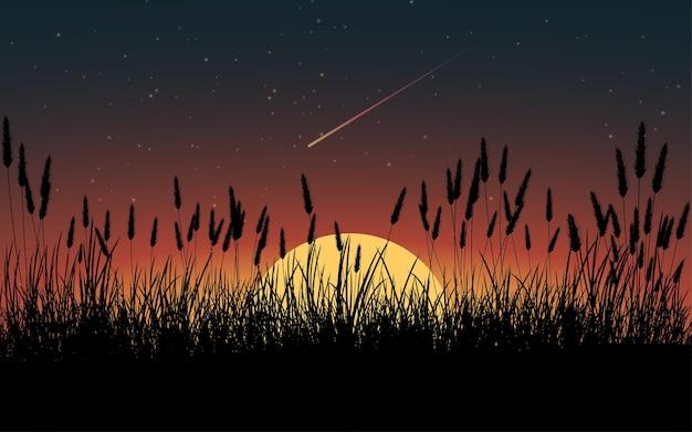 Закат фон с высокой травой силуэт
