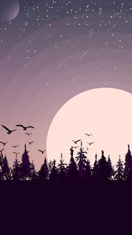 Закат в сосновом лесу