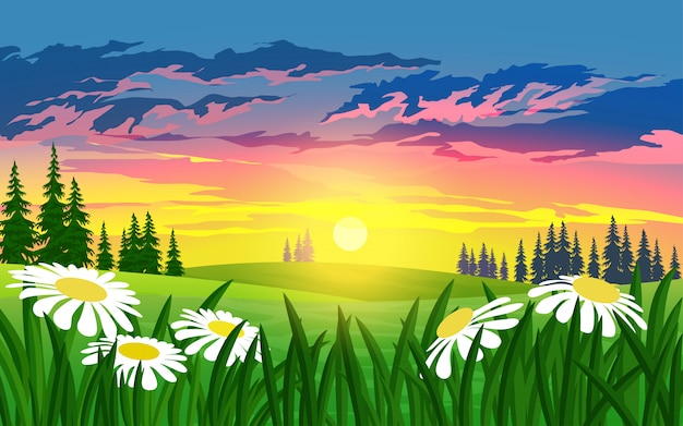 Sunset in meadow