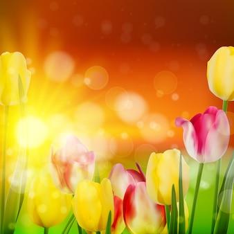 Закат над полем красочных цветущих тюльпанов.