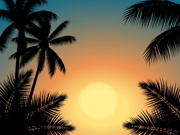 Sunset sky with palm tree silhouette