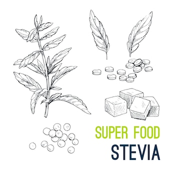 Super food hand drawn