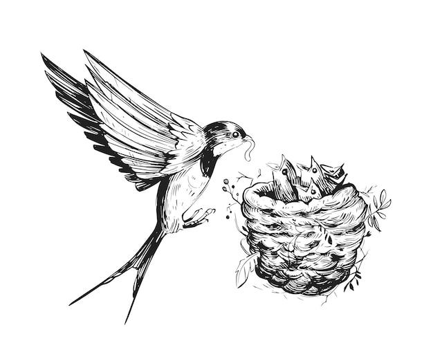 제비는 둥지에있는 병아리에게 먹이를줍니다. 손으로 그린 그림 격리 됨 화이트 프리미엄 벡터
