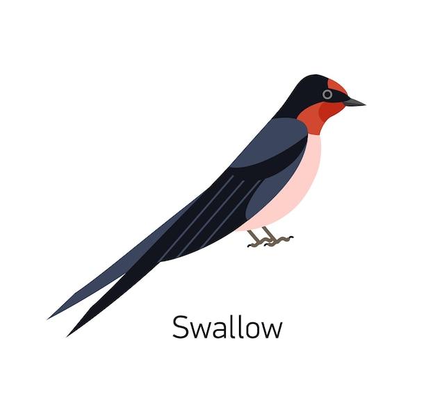 白い背景で隔離のツバメまたはマーティン。愛らしい小さな食虫性の小さな鳥。ゴージャスな野生の鳥類。かわいいバーディー。トレンディなフラットな幾何学的なスタイルのモダンなベクトルイラスト。