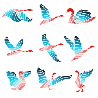 Swan colour