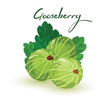 Кисло-сладкий зеленый крыжовник с листьями.