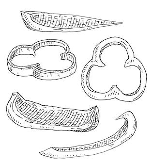 Сладкий болгарский перец разными ломтиками. винтаж штриховки черная иллюстрация.
