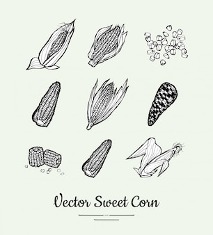 Sweet corn, corncobs, maize isolated groceries vector set