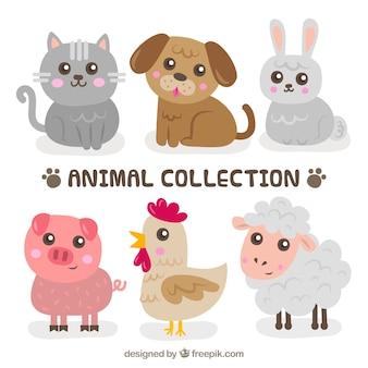 Confezione dolce di cuccioli di animale