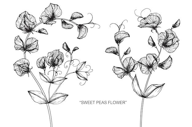 甘い豆の花のイラストのイラスト