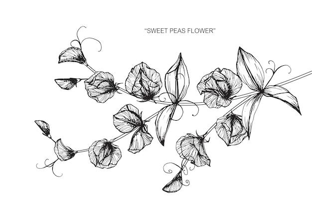 甘いエンドウ豆の花の描画のイラスト。