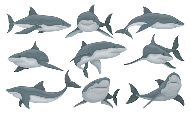 スイミングサメセット、白い背景の海の動物の魚のイラスト