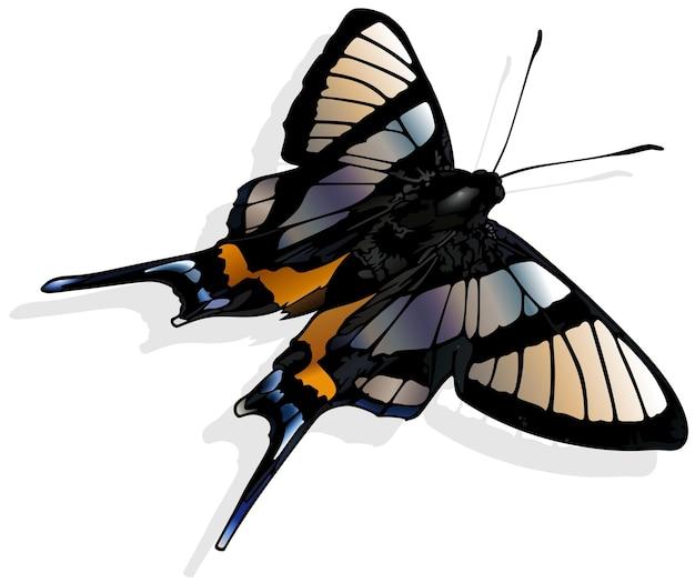 Сильфина ангел бабочка chorinea sylphina