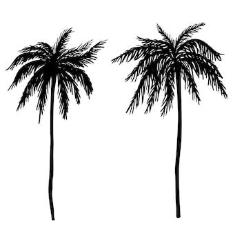 手描きのヤシの木のイラストのセットです。ポスター、カード、バナー、tシャツの要素。画像