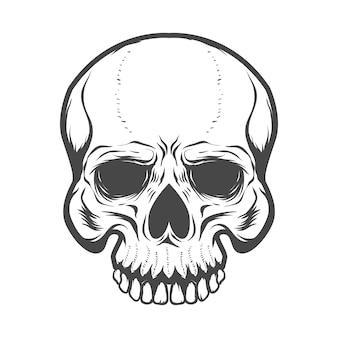 白い背景の上の頭蓋骨の図。 、ラベル、エンブレム、ポスター、tシャツの要素。図。