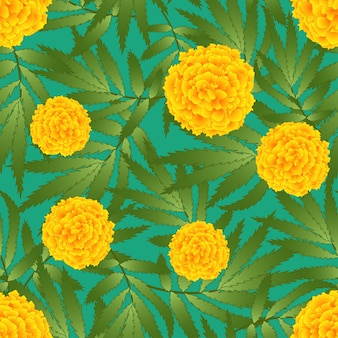 Tagetes on green background