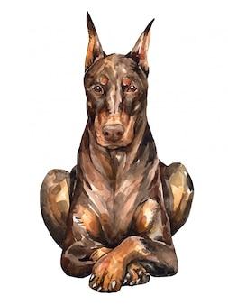 タンドーベルマンピンシャー。かわいい犬の水彩画。