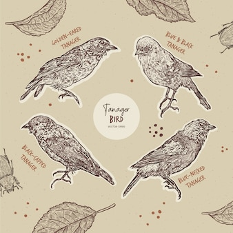 Tanager birds collection, hand draw sketch  .