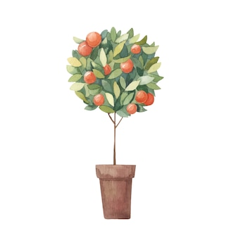 Tangerine, citrus tree watercolor illustration on a white background