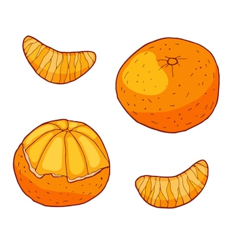 Tangerine with slices. hand drawn   illustration. isolated