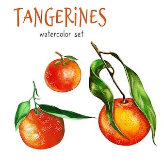 Иллюстрация мандаринов