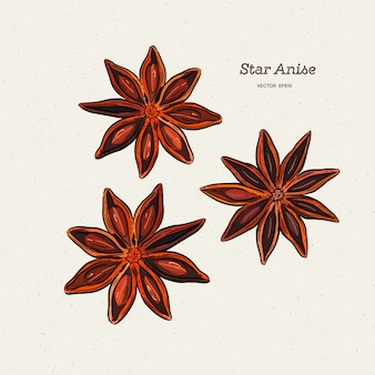 Tar anise drawing.