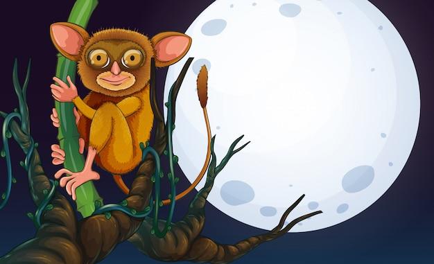Тарсир на дереве ночью