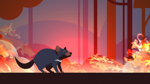 Tasmanian devil escaping from forest fires in australia animal dying in wildfire bushfire burning trees natural disaster concept intense orange flames horizontal