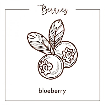 Tasty blueberry with leaves monochrome berry sepia sketch
