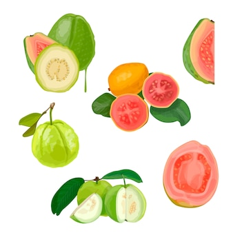 Tasty guava illustration