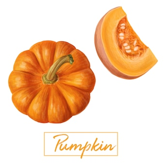 Tasty pumpkin drawing