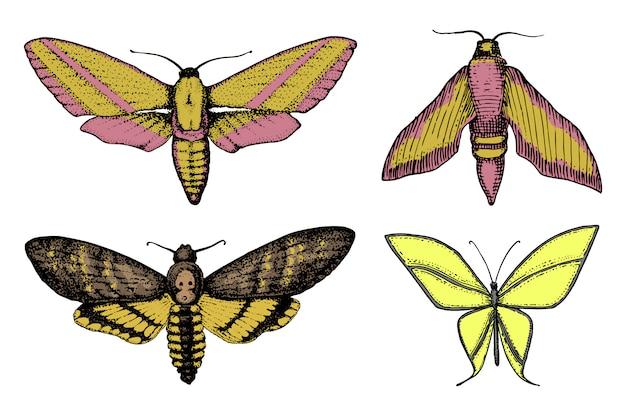タトゥーや自由奔放に生きるtシャツやスクラップブッキング。自由と旅行の神秘的な難解なシンボル。蝶や昆虫のスケッチ。昆虫学的コレクション。古いスケッチとビンテージスタイルで描かれた刻まれた手