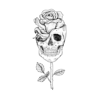 Tattoo and t shirt design hand drawn skull and rose