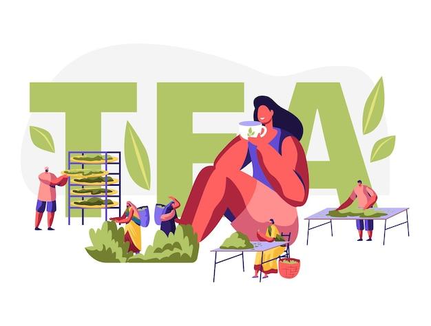 차 개념. 농장에서 신선한 찻 잎을 수집하는 전통적인 인도 옷의 남성과 여성 캐릭터, 차를 마시는 여자. 포스터, 전단지, 브로셔. 만화 평면 벡터 일러스트 레이 션