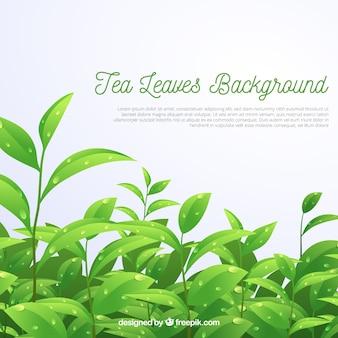 Фон из чайных листьев в реалистичном стиле Бесплатные векторы