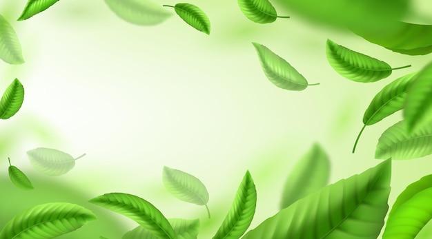 Предпосылка листьев чая. реалистичные зеленые падающие и кружащиеся листья, баннер для рекламы и дизайна упаковки. векторная иллюстрация зеленый чай дождь фон