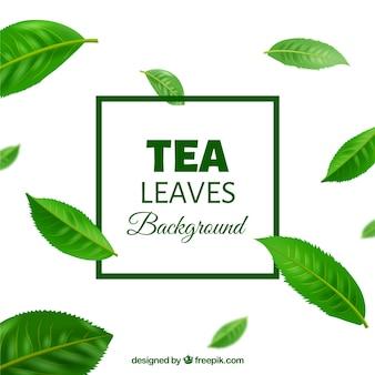 Foglie di tè sullo sfondo in stile realistico