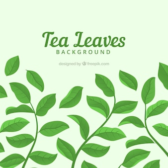 Tea leaves background with different plants