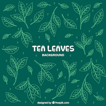 Tea leaves background with hand drawn style