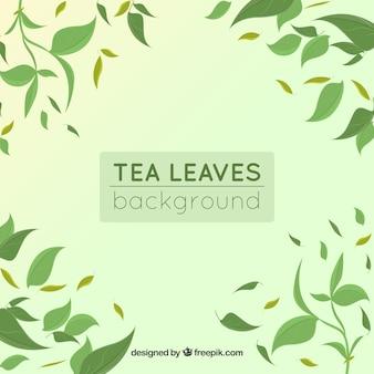 Фон чайных листьев