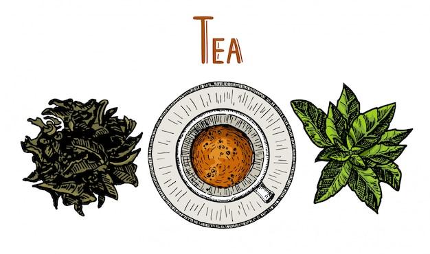 茶マグカップと茶葉。手描きのスケッチ図。メニュー、カフェ、レストラン、バー、ティーショップ、エンブレム、ステッカー、バッジに使用できます。