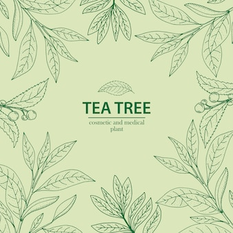 Tea tree. vector hand drawn herbal background
