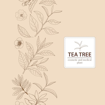 Tea tree. vector hand drawn herbal background