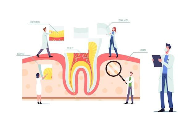 Концепция анатомии и структуры зубов с крошечными стоматологами-врачами-персонажами на огромной инфографике зубов с частями десны, пульпы, костей, дентина или эмали, плакат о медицинской помощи. мультфильм люди векторные иллюстрации
