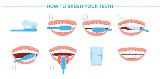 歯の衛生。歯、歯ブラシ、歯磨き粉をブラシで洗います。歯科治療をブラッシングするステップ。口腔病学と健康な口のイラスト。歯ブラシ医療、歯ブラシスキーム、口腔病学の健康