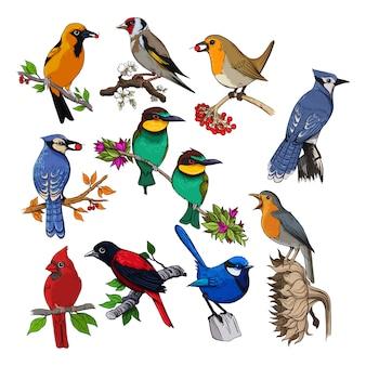 Template bird pack vector