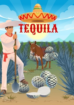 Tequila agave plantation worker, mule or donkey with pinas hearts. jimador harvester on field, man in sombrero hat cutting agave leaves with coa tool. tequila production, agave growing and harvesting