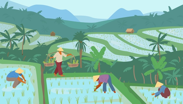 Terraced asian rice fields in mountains with workers in conical straw hats. traditional agriculture.