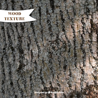 Texture of old tree trunk